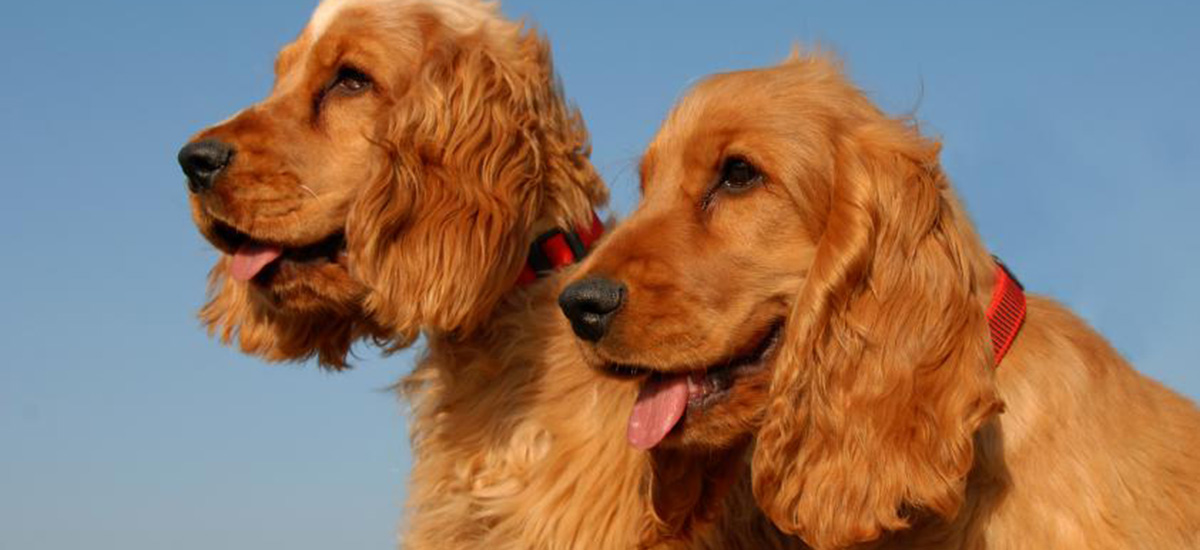 STAY ALERT – DOGS BEING TAKEN