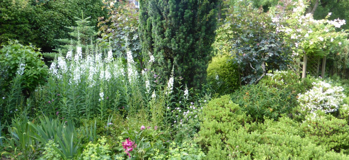 NGS Open Gardens – 19th May & 19th June